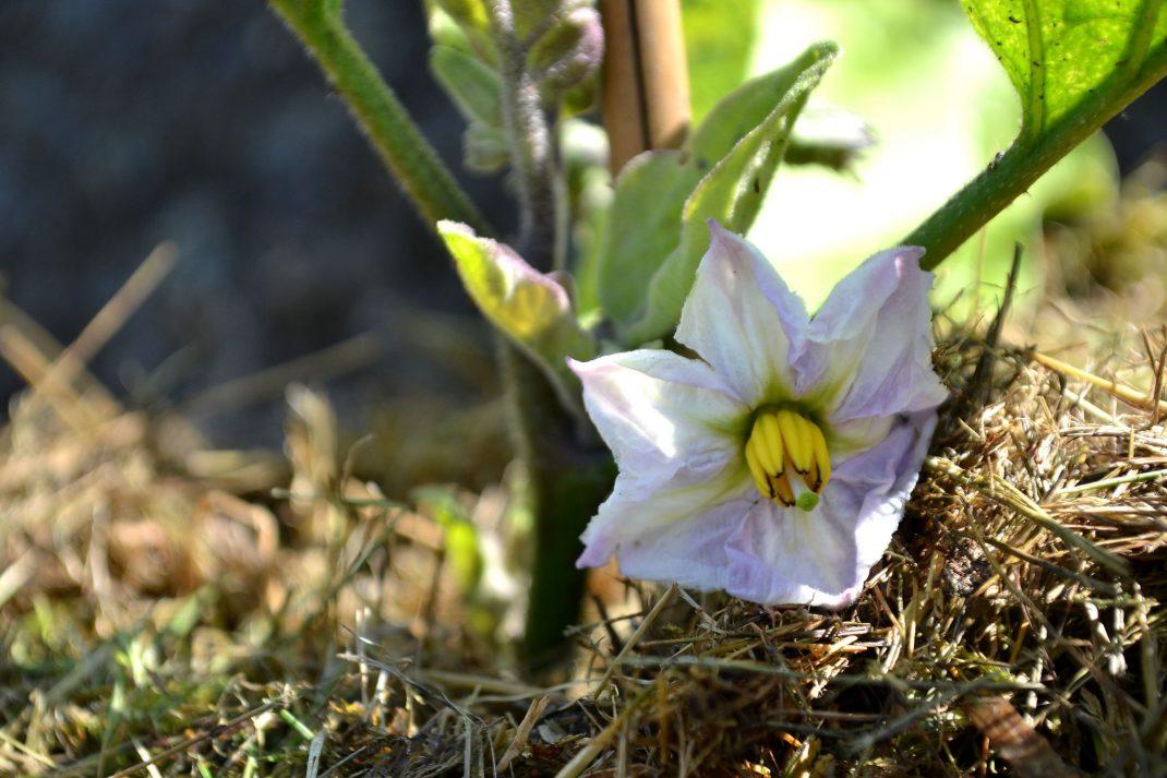 Närbild på en vit blomma med gul mitt.