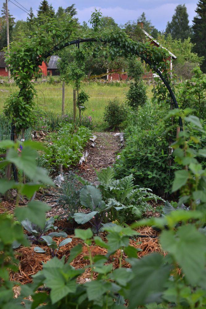 Vy över köksträdgården med en röd byggnad i bakgrunden.
