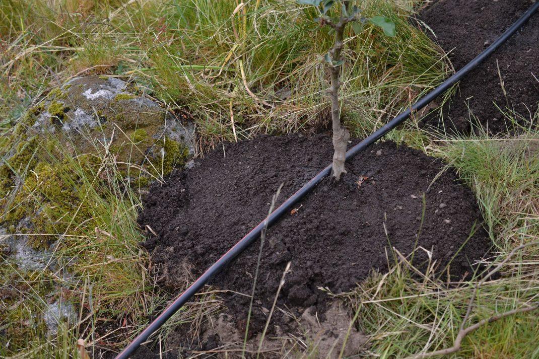 En planteringsgrop fylld med jord.