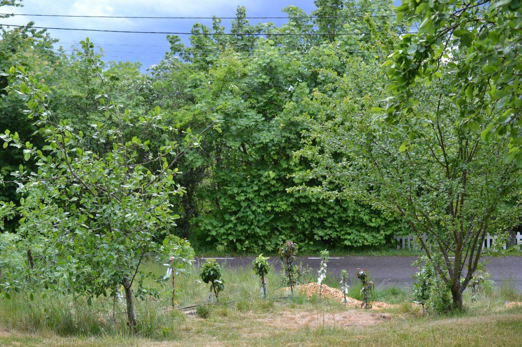Fruktträd i grönt med en mörk himmel bakom.