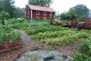 Skillnadens trädgård i sommarprakt