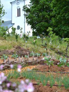 En köksträdgård med odlingsbäddar
