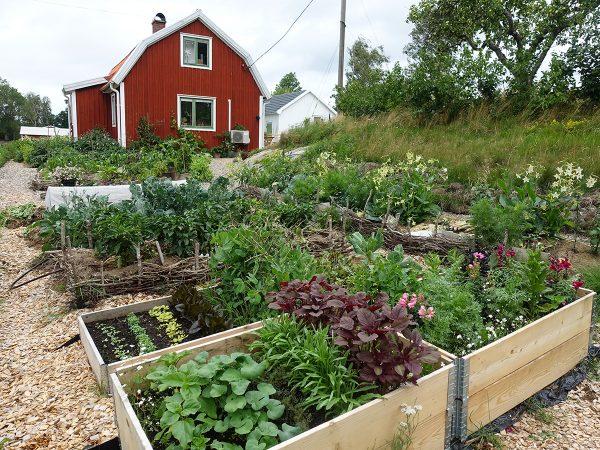 Ett rött litet hus och en fin prunkande köksträdgård av odlingsbäddar och pallkragar.