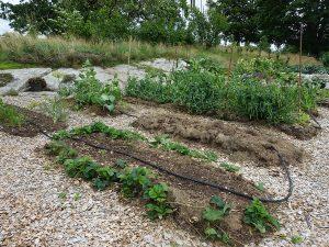 Odlingsbäddar i en köksträdgård