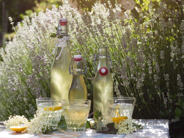 Gammaldags flaskor fyllda med fläderblomssaft på ett bord i ett hav av lavendel.