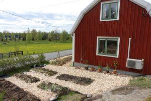 En blivande köksträdgård med träflis i gångarna.