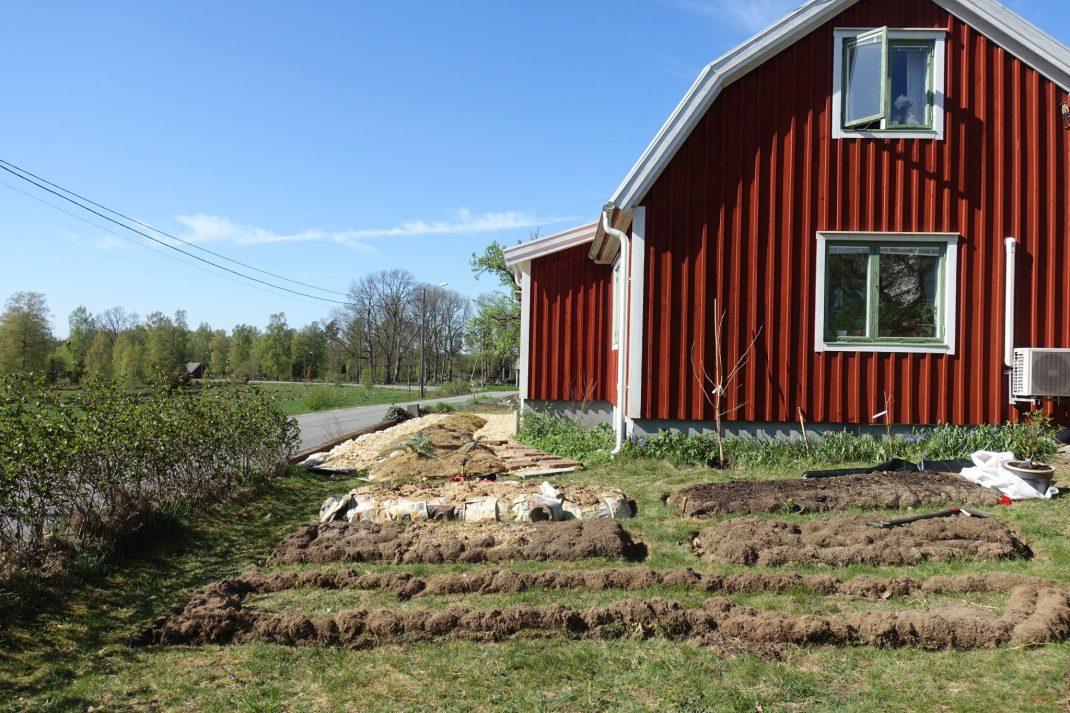Bäddar anläggs i en ny liten köksträdgård.