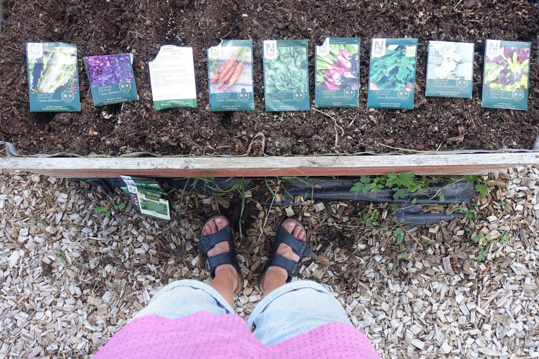 Odlingslådan fotograferad ovanifrån med fröpåsar liggandes i rad ovanpå.