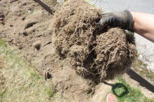 En hand håller en jordig grästorva.