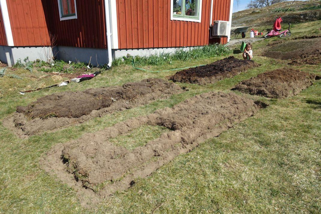 Bild på gräsmatta med början till bädd av jord på.