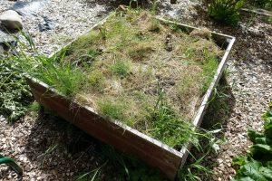 Odlingslåda med täckmaterial och lite ogräs