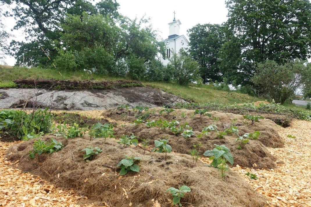 Köksträdgård med bäddar täckta av gräsklipp.