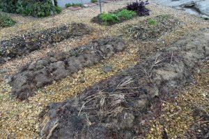 Tomma odlingsbäddar med gammalt gräsklipp på.