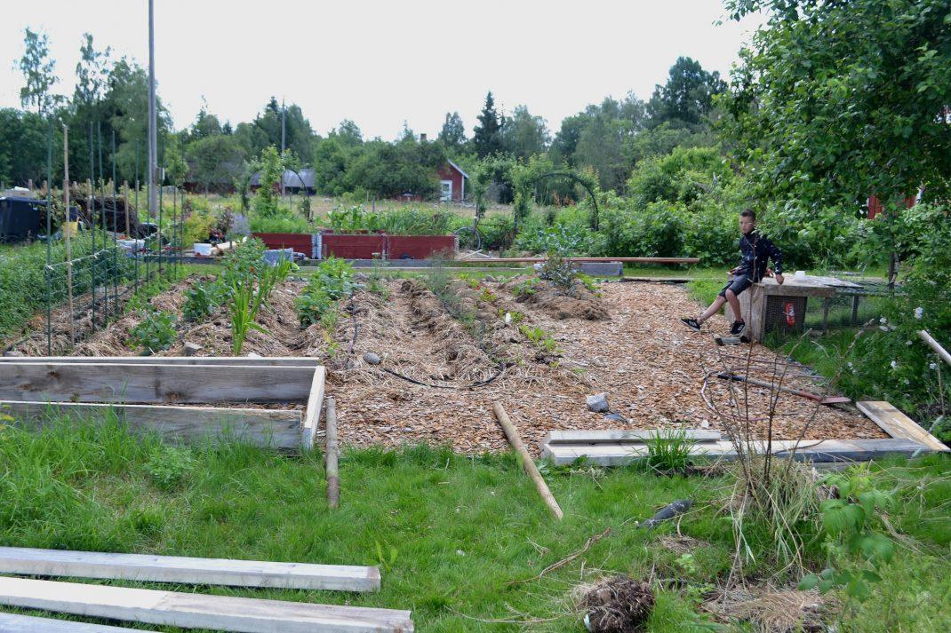 Trädgård med bäddar och träflis på marken.