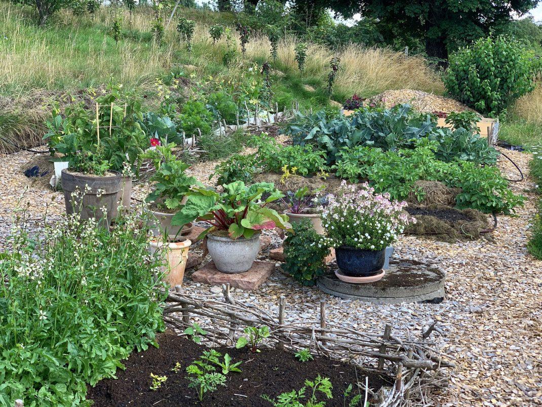Bild på en liten grönskande grönsaksodling.