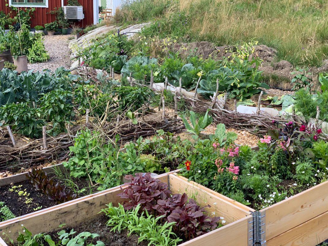 Köksträdgård med pallkragar och odlingsbäddar.