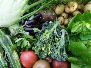 En härlig augustiskörd med broccoli, tomat, potatis, fänkål, squash, aubergine och sallat.