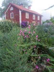 Skillnadens hus i ett hav av odlingar ohc rosa luktärter i förgrunden.