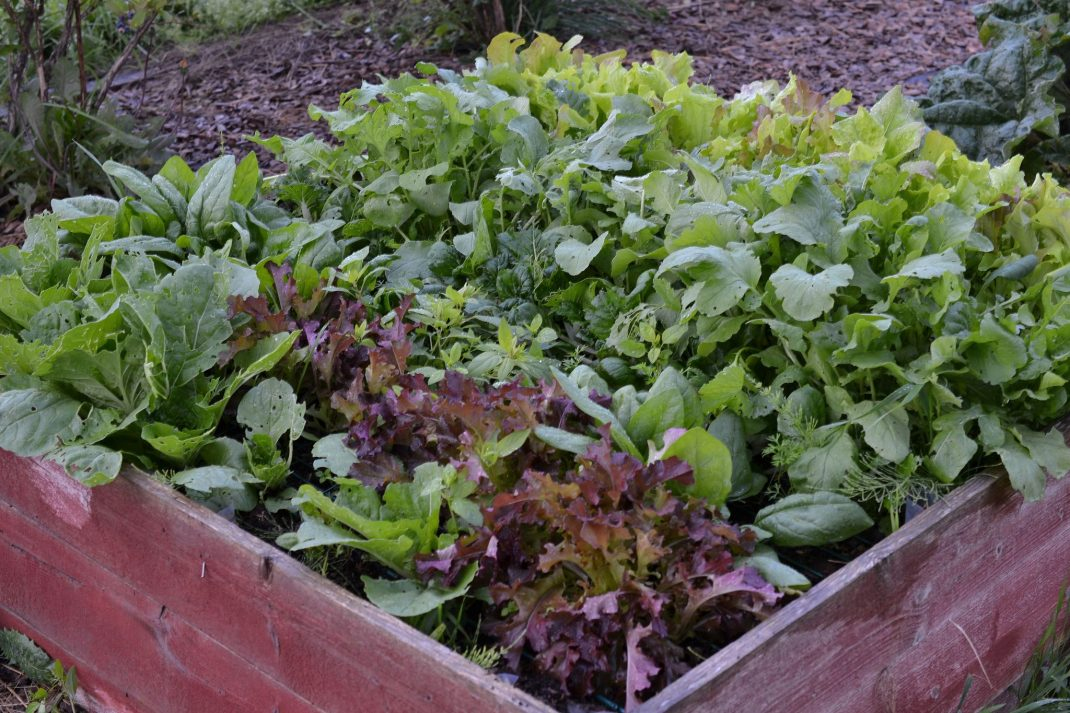 En röd låda med många bladgrönsaker i.