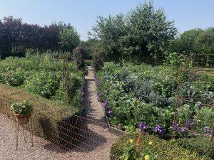 En maffig köksträdgård med grusgång.