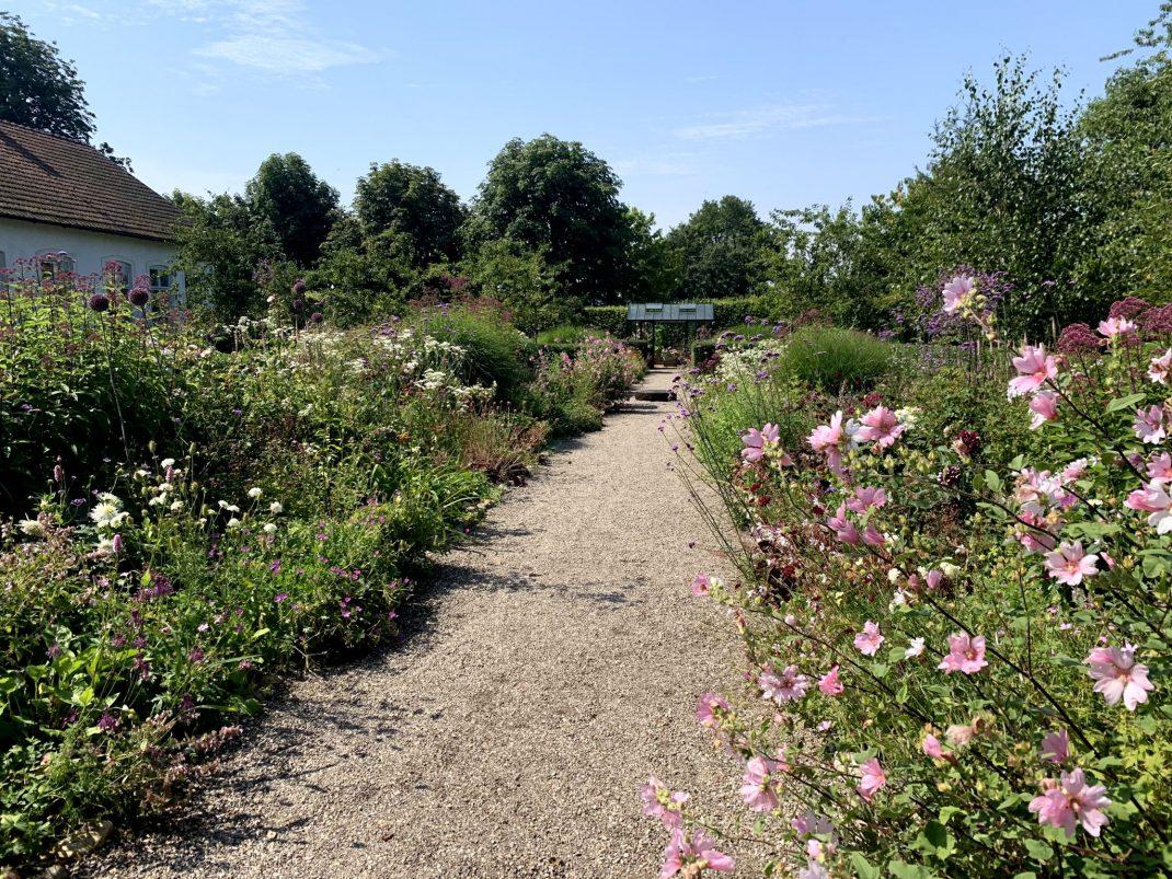 En trädgård med rosa blommor och en grusgång.