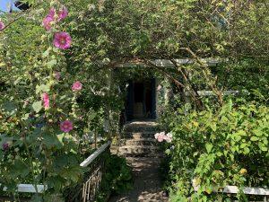 En dörr bland massa växter.