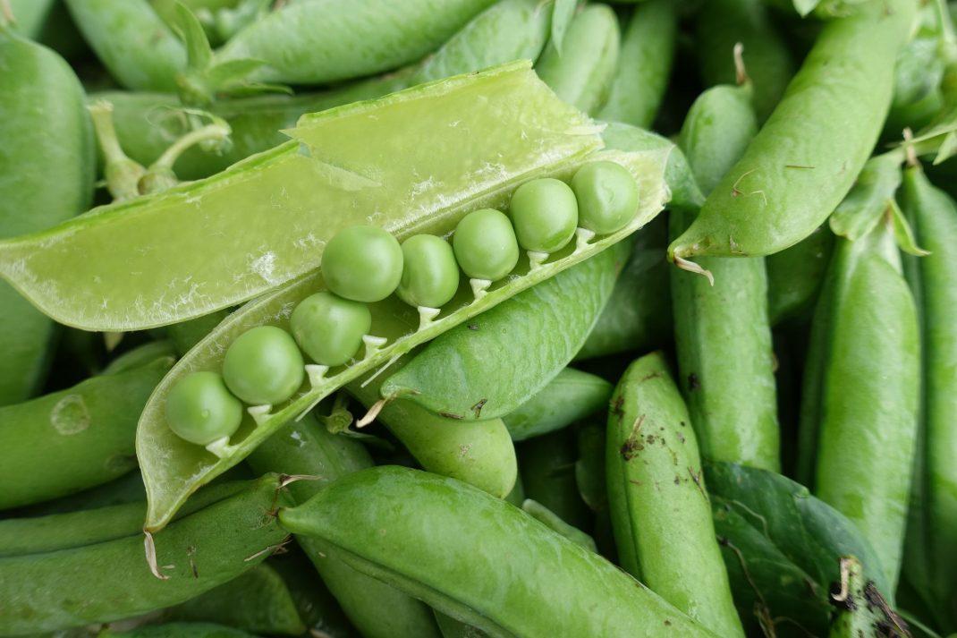 En stor kastrull fylld med gröna ärter.