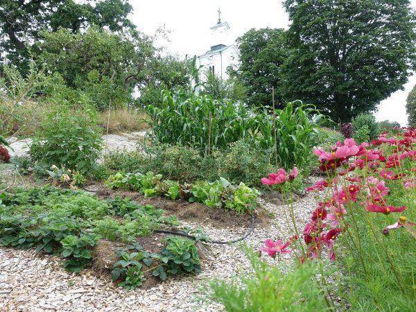 En köksträdgård med gröna växter och rosa blommor.