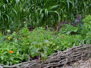 En samodlad odlingsbädd av blommor och grönsaker