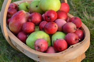 En korg med röda och gröna äpplen.