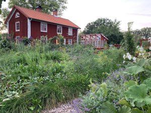 Köksträdgård framför ett rött boningshus.