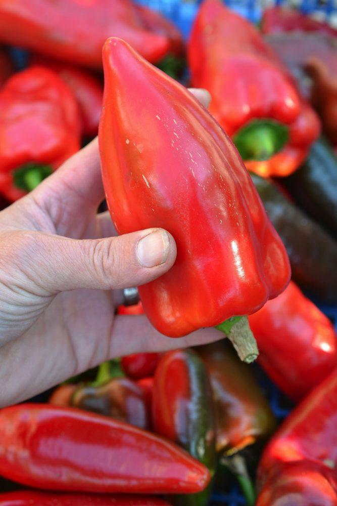 En röd paprika med spetsig ände hålls i en hand.