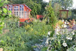 Köksträdgård med blommor och rött växthus bland grönska.