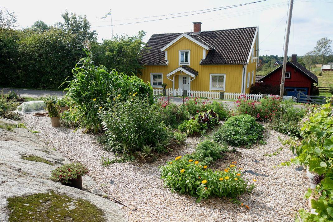 Överblicksbild över köksträdgård som omgärdas av ljust träflis.