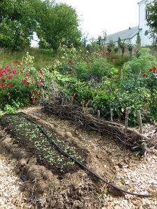 En blomstrande köksträdgård med en upphöjd odlingsbädd med vintersallad som gror fint.