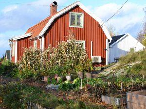 En röd liten stuga med en köksträdgård i höstskrud.