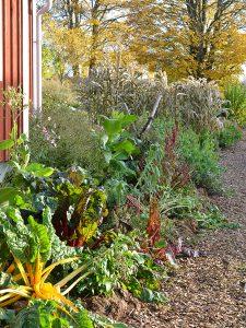 En höstig köksträdgård.