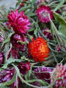 Eterneller i härliga röda och rosa färger.