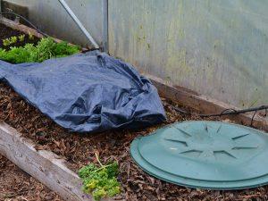 Två varianter av stukor i ett tunnelväxthus, en är täckt med en svart plastsäck och den andra med ett grönt plastlock.