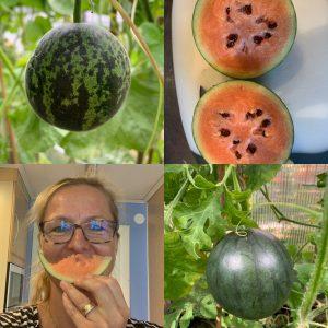 Billkollage med vattenmeloner och en glad kvinna som äter en skiva melon.