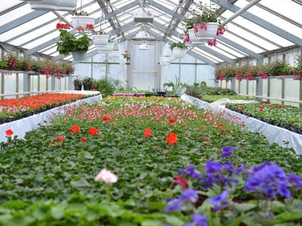 Massor av plantor och blommor i ett stort växthus.