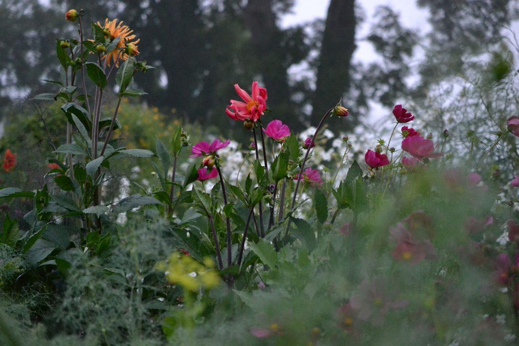Suddiga bladverk och färgglada blommor.