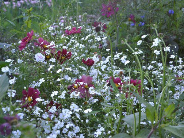 Vita blommor med svävande flor.