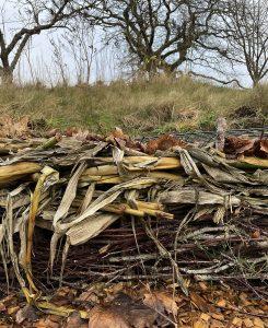 En odlingsbädd täcktoch inbäddad med rikligt av växtmaterial.