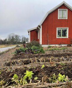 En röd stuga med köksträdgård i höstkostym.