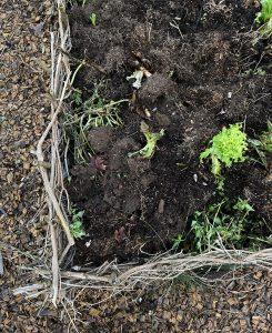 En odlingsbädd inramad med kviststaket har fortfarande lite grönt kvar att skörda av.