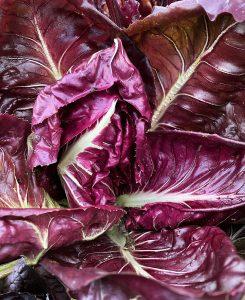 Röda salladsblad