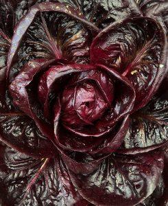 Ett mörkrött sallatshuvud
