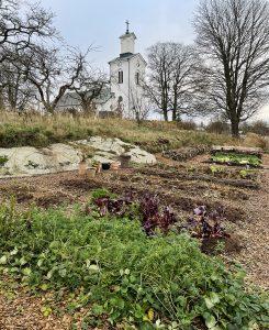 En köksträdgård med odlingsbäddar och gångar av flis. Bakom tornar en vit kyrka upp sig.