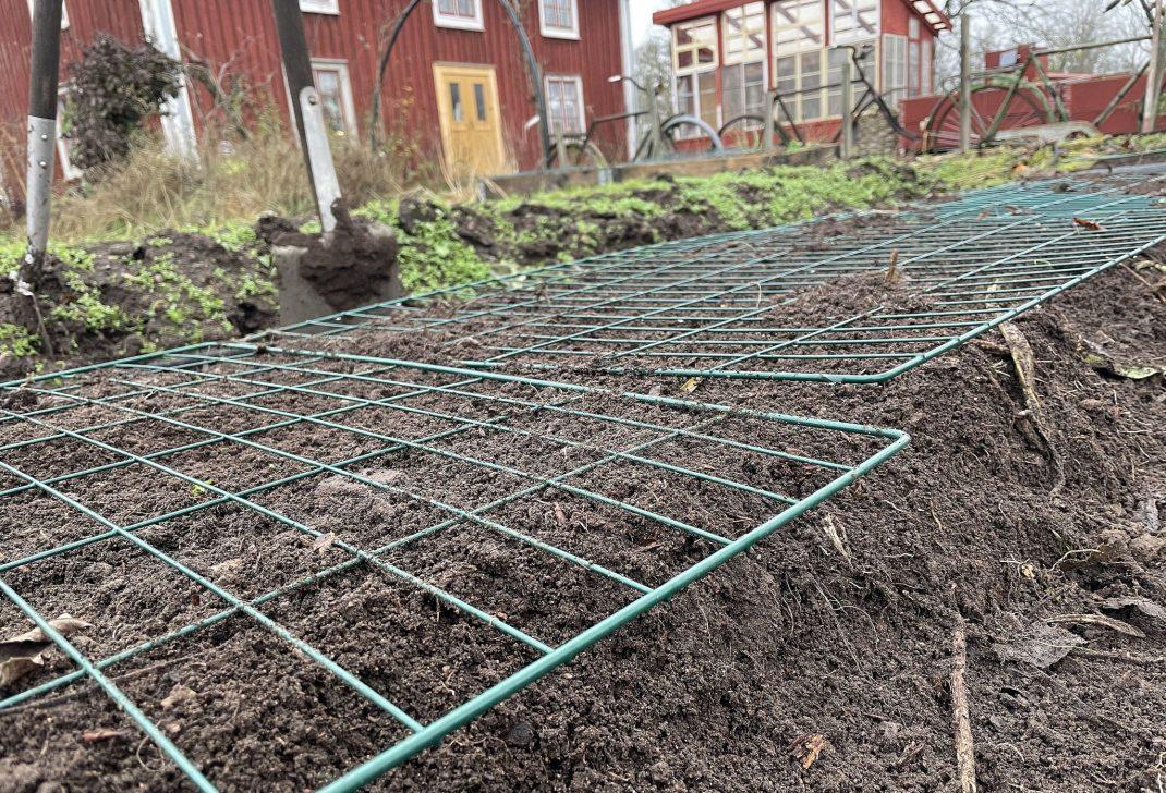 Närbild på odlingsbädd med kompostgaller ovanpå.